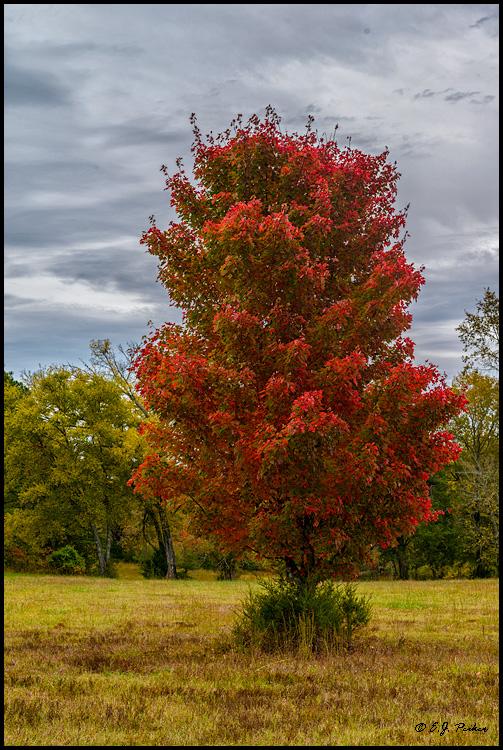 Arkansas >> Ouachita Mountains Page
