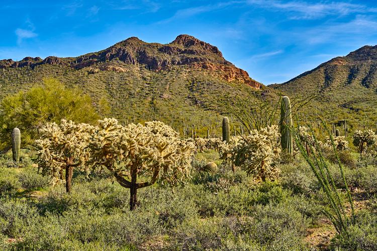 Arizona Page