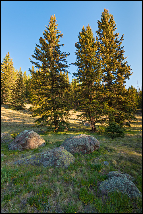 Mt Baldy Wilderness, Apache National Forrest, White Mountains, AZ