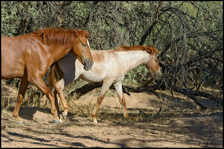 Wild Horse Page