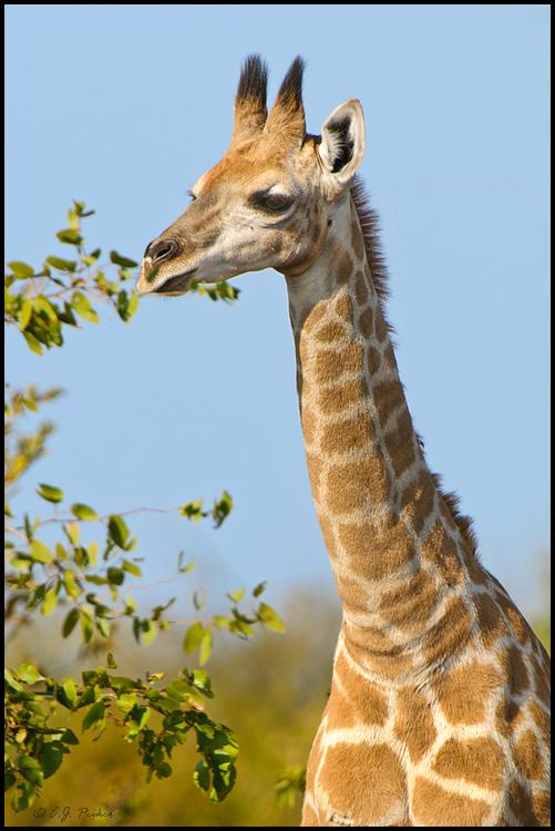 Part 5: Samburu National Park   Fish Eagle Safaris