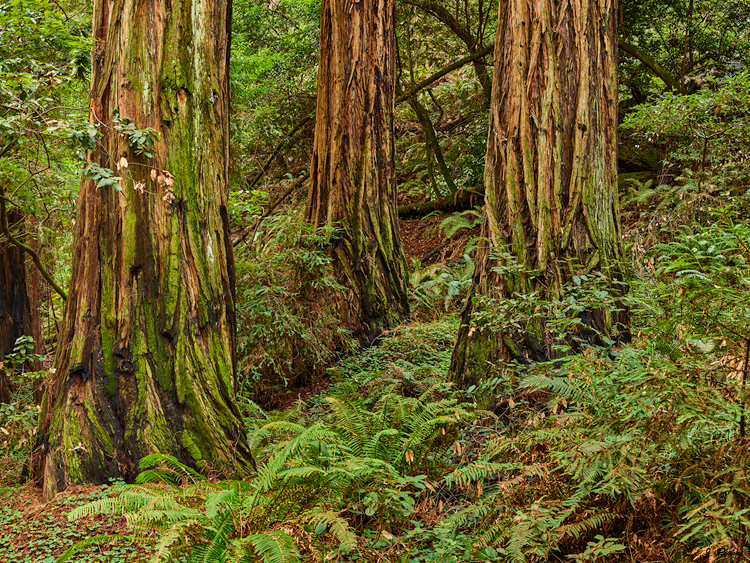 Muir Woods National Monument, CA