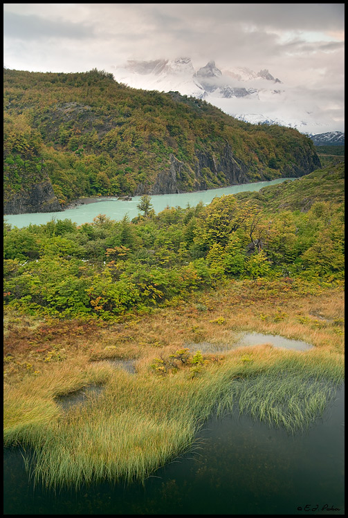 Patagonian Rainforest