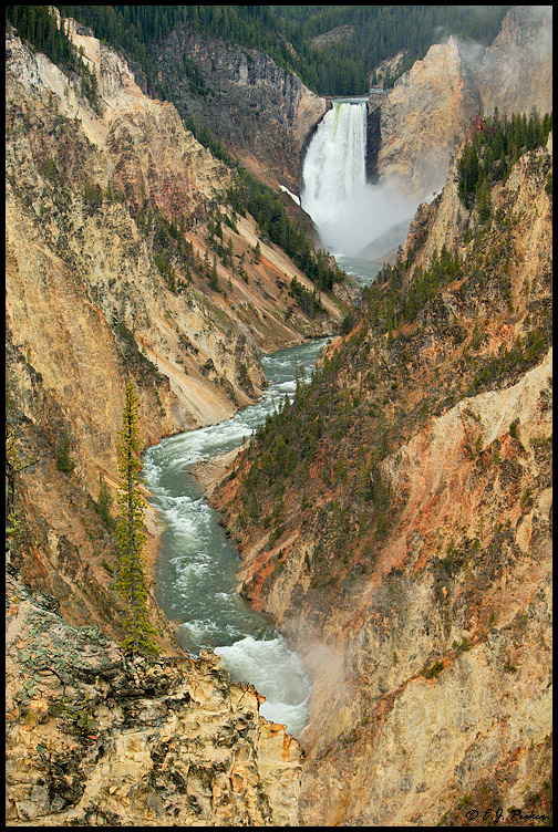 Lower Falls, Yellowstone NP, WY
