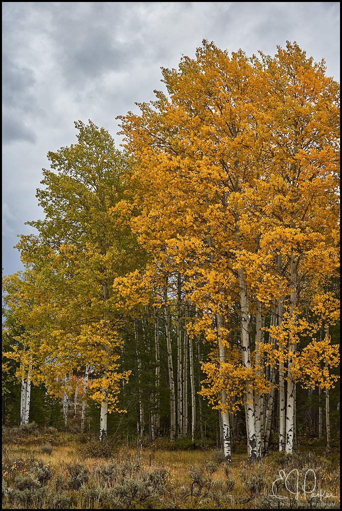 Fall Foliage, Grand Teton NP